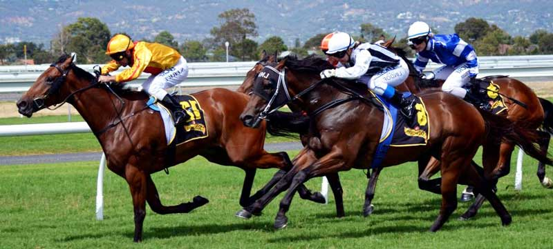 Corridas de cavalos 51827